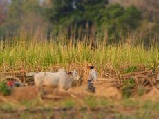 2014年3月・ミャンマー シャン州タウンジー県